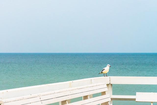 seagull-1785425_640